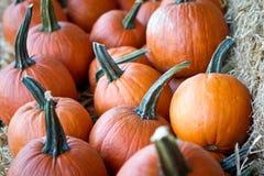 Moisson de potiron d'automne Image stock
