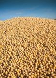 Moisson de soja photo libre de droits