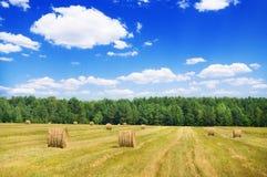 Moisson des collectes agricoles de texture photographie stock