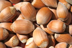 Moisson des fruits nuts Photos libres de droits