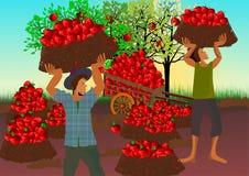 Moisson des pommes illustration libre de droits