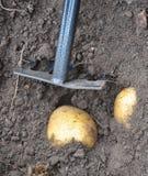 Moisson des pommes de terre photographie stock