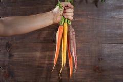 Moisson des raccords en caoutchouc Main avec le groupe de carottes avec des dessus sur la rouille Photographie stock libre de droits