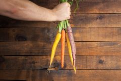 Moisson des raccords en caoutchouc Main avec le groupe de carottes avec des dessus sur la rouille Photos libres de droits