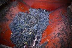 Moisson des raisins Image libre de droits