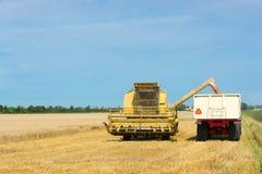 Moisson du blé pendant la fin de l'été Image stock