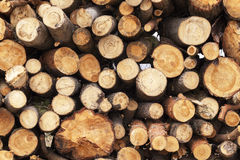 Moisson du bois dur logs photo stock