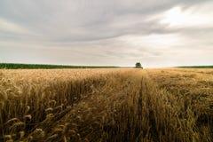 Moisson du champ de blé avec le cartel Photos stock