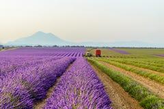 Moisson du gisement de lavande, la Provence photos stock