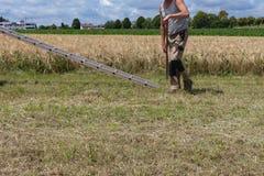 moisson du tracteur et de l'agriculteur de remorque photographie stock libre de droits