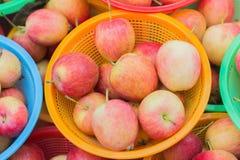 Moisson fraîche des pommes Image stock