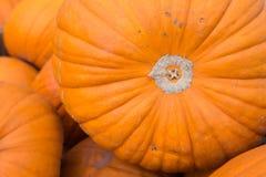 Moisson pumking de géant orange organique frais de la ferme au farme Images libres de droits