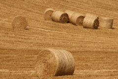 Moisson terminée par fermiers Photographie stock