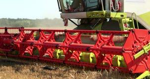 Moissonneuse de cartel dans l'action sur le champ de bl? La moisson est le processus de recueillir une culture m?re des champs Pr banque de vidéos