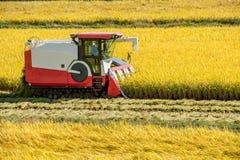 Moissonneuse de cartel dans le domaine de riz pendant le temps de récolte Images stock