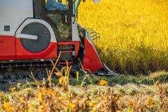 Moissonneuse de cartel dans le domaine de riz pendant le temps de récolte Photos stock