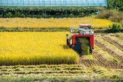 Moissonneuse de cartel dans le domaine de riz pendant le temps de récolte Photo stock