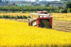 Moissonneuse de cartel dans le domaine de riz pendant le temps de récolte Photographie stock libre de droits