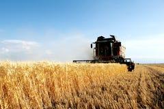 Moissonneuse de récolte de blé dans l'action image libre de droits