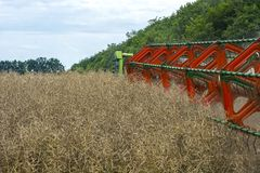 Moissonneuse de moissonneuse rassemblant les haricots mûrs de graine de colza sur le champ image stock