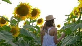 Moissonnez, des promenades de jeune fille entre les rangées des tournesols et appréciez la beauté du champ à la lumière du soleil banque de vidéos