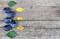 Moissonnez les prunes mûres pour mettre en boîte sur les feuilles en bois de fond, de jaune et de vert images libres de droits