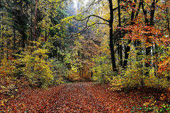 Moist forest colorful at fall. A colorful forest scenery with a multitude of fallen leaves covering the road at a rainy day. Fall landscape in Germany Stock Images