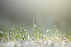 Moist grass in sunlight Stock Photo