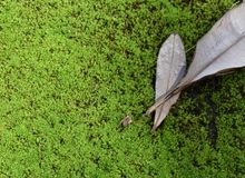 Moist Green background. Green ground in the rain forest Stock Image