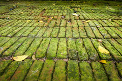 Moist green moss covered bricks floor Stock Images