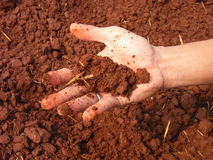 Moist soil Royalty Free Stock Photo