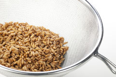Moist Spelt in Strainer Stock Photo