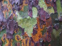 Moist tree bark of a plane tree horizontal Stock Photography