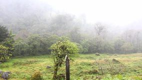 Moisture laden clouds move over tropical forest. In Panama stock video