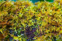 Moisture on moss plant. After rain in the forest Royalty Free Stock Photos