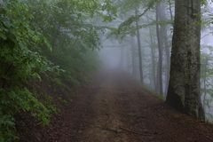 Moisture. Thick fog on a mountain slope in Carpathians Royalty Free Stock Photo