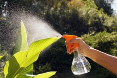 Splashes of water. Moisturizing the plant leaves with a manual s. Moisturizing the plant leaves with a manual sprayer Stock Photos