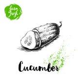 Moitié découpée en tranches par style tiré par la main de croquis de concombre Affiche fraîche de légumes de ferme de vecteur Photos stock