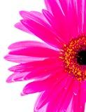 Moitié d'une fleur Image stock