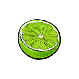 Moitié de chaux verte mûre, illustration de vecteur de croquis illustration libre de droits