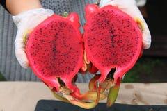 moitié de dragonfruit rouge Image libre de droits
