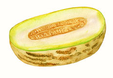 Moitié de melon Photo libre de droits