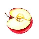 Moitié de pomme Photo stock