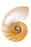 Moitié sectionnée de Nautilus Image stock