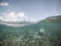 Moitié sectionnée et demi vue avec des vagues des palourdes géantes sous l'eau a Images libres de droits