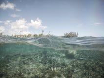 Moitié sectionnée et demi vue des palourdes géantes sous l'eau au sanc de palourde Photographie stock libre de droits