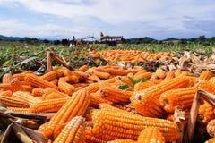 Moize在农场 免版税库存照片