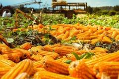 Moize在农场 免版税库存图片