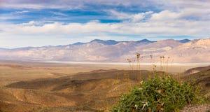 Mojaveöken Arkivfoto