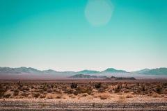 Mojaveöken nära Route 66 i Kalifornien royaltyfria bilder